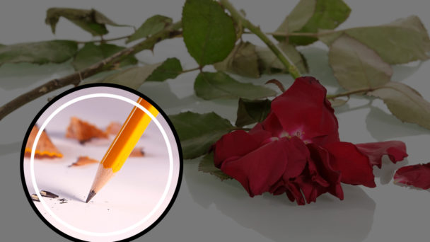 En trasig röd ros på ett vitt golv, med en skrivande blyertspenna monterat över