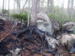 Christer Gruber bredvid ett träd som brunnit