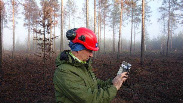 Christer Gruber bland träden i skogen som brunnit
